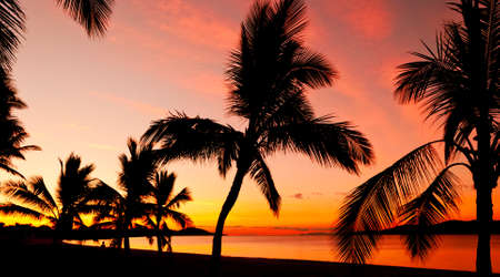Palms silhouettes at sunset on a tropical beach photo