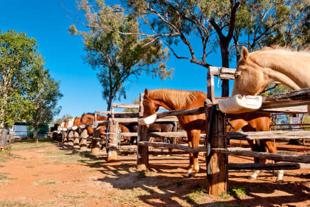 Wild horses eating in a stable Stock Photo - 15690057