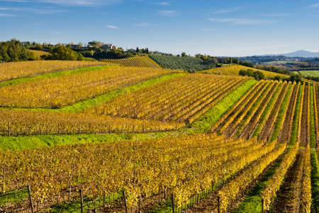 Chianti wine region vineyards, Tuscany, Italy photo