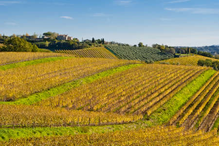 Chianti wine region vineyards, Tuscany, Italy Stock Photo - 16462382