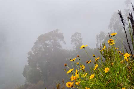 Dense fog at Blue Mountains National Park, Sydney Stock Photo - 16727462