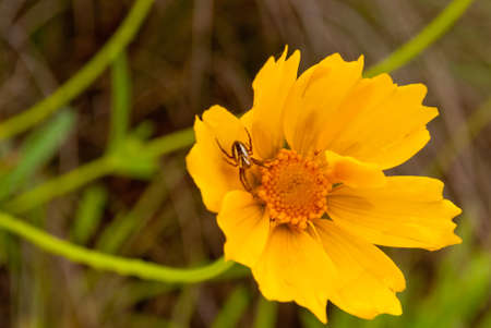 Little spider on a yellow flower photo