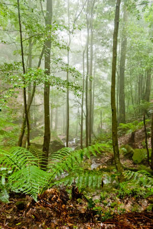 Vegetation in Blue Mountains National Park, NSW, Australia Stock Photo - 16727464