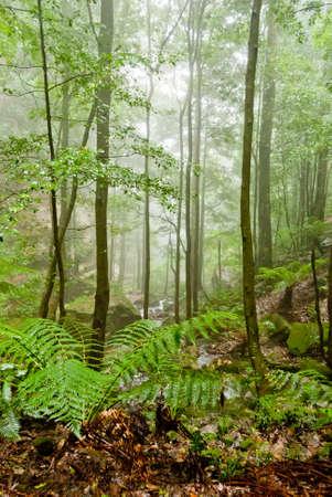Vegetation in Blue Mountains National Park, NSW, Australia Stock Photo - 16727464