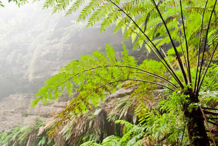 Vegetation in Blue Mountains National Park, NSW, Australia Stock Photo - 16727463