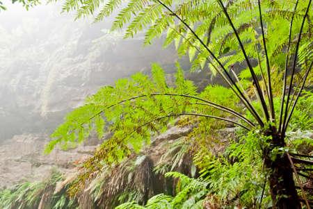 Vegetation in Blue Mountains National Park, NSW, Australia Stock Photo - 16727463