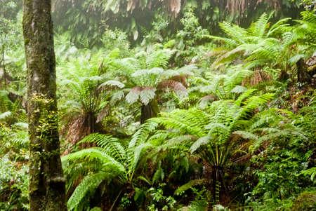 Vegetation in Blue Mountains National Park, NSW, Australia Stock Photo - 16727465