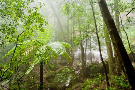 nsw: Vegetation in Blue Mountains National Park, NSW, Australia