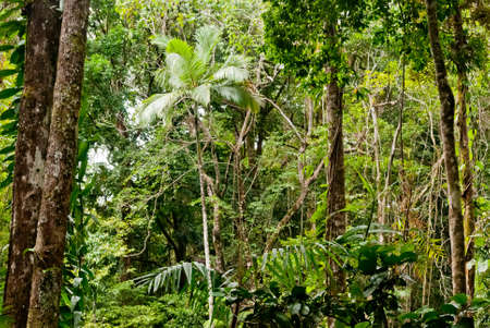Forest in Mossman Gorge, Daintree National Park, Australia Stock Photo - 16970403