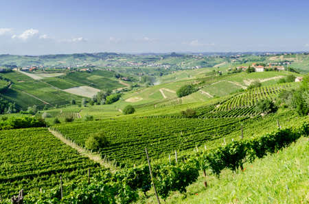 hilly: Langhe, hilly wine region in Piedmont, Italy Stock Photo