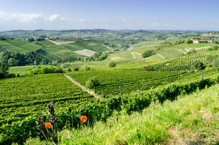 Langhe, hilly wine region in Piedmont, Italy photo