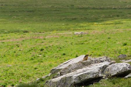 burrow: Cute marmot