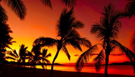 Silhouettes de palmiers sur une plage tropicale au coucher du soleil