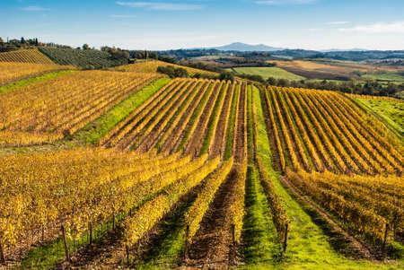 Tuscany, Chianti vignards Stock Photo