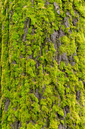 Moss-covered tree Banco de Imagens