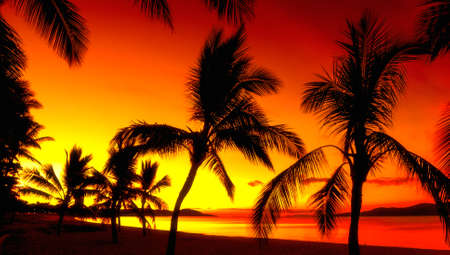 Palms silhouettes on a tropical beach at sunset photo