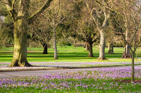 botanic: Botanic garden with flowers Stock Photo