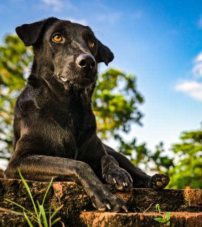 guard dog: Black guard dog