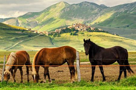 norcia: Castelluccio di Norcia (Umbria Italy)