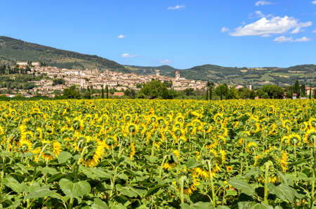 umbria: Spello (Umbria Italy)