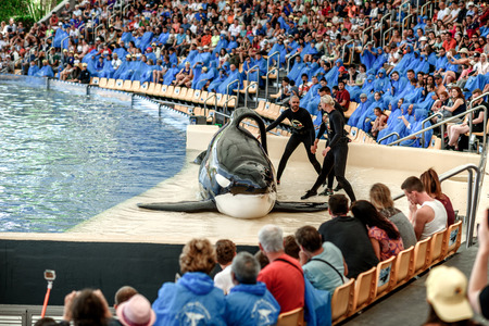 TENERIFE, SPAIN - April: water shows with killer whales in Loro Park (Loro Parque) on april 2017 Tenerife, Spane. Loro Park one of the most famous amusement parks in Europe.