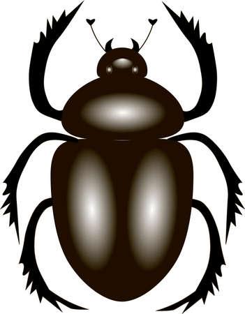 scarab: scarab beetle, vector illustration with a beetle-scarab