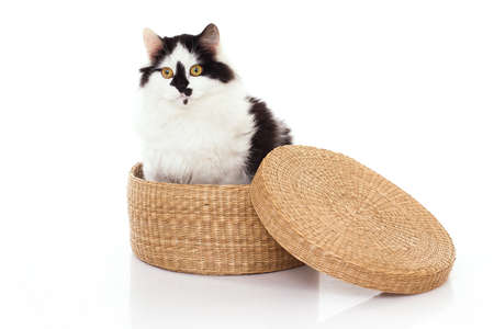 White and black cat in the wicker box against the white background photo