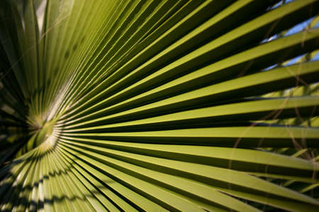 tropics: Green leaf of the palm tree in the tropics Stock Photo