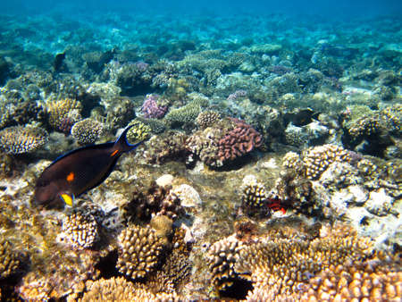 sohal: Marine life underwater in the Red sea