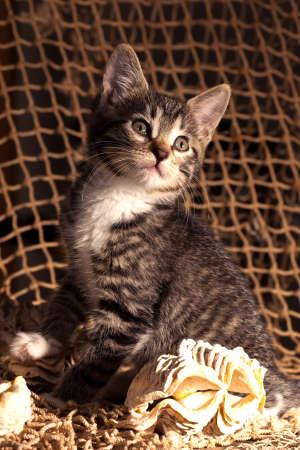fishermans net: Small kitten sitting on the fishermans net