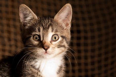 fishermans net: Small kitten portrait against the fishermans net