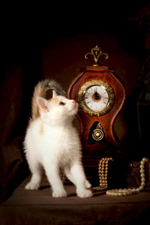 perls: Small kitten standing and looking curious against the dark background with vintage clock and perls Stock Photo