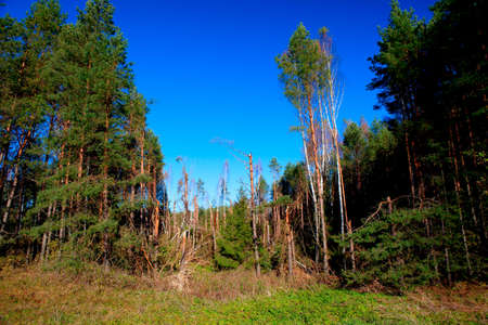 squall: Debris of trees in the forest after the squall on August 8, 2010, Alytus county, Lithuania Stock Photo
