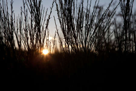 blurr: Sunset through high grass silhouette in the autumn evening