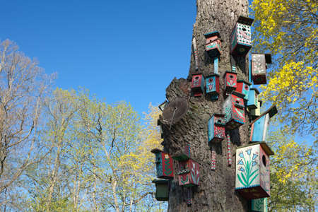bird house: Nesting-boxes on the tree in the park of Verkiai palace, Vilnius, Lithuania