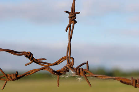 barb: Old rusted barb wire