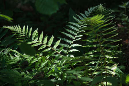 cognitive: Fernery in Cognitive track of Varnikai botanicalzoological preserve Stock Photo