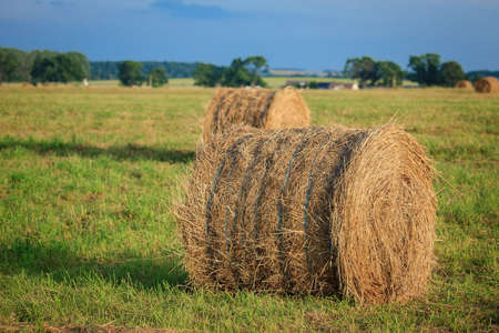 Hay bales in the meadow. Rural landscape in Lithuania Stock Photo