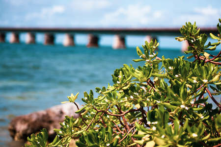 Piling support of abandoned and damaged Old Seven Mile Bridge railroad with landscape view in Florida Keys in Atlantic ocean near Overseas Highway Foto de archivo - 120481946