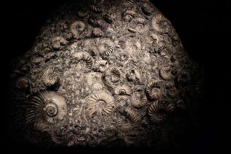 Ammonit fossile Textur als sehr schöner natürlicher geologischer Hintergrund
