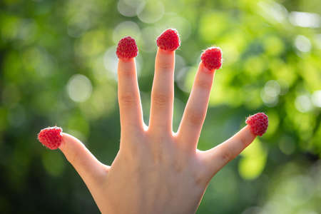 Closeup of a female hand with raspberries on fingers against the green summer garden bokeh. Harvest of berries, having fun outdoors and healthy nutrition concept. Zdjęcie Seryjne