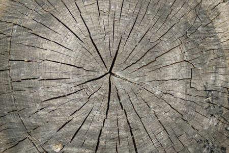 Texture of natural wood. Cut of old hemp