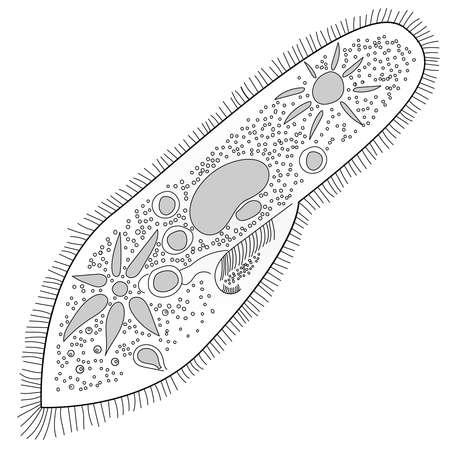 bacteria iconsslipper animalkul vector illustration on white background Иллюстрация