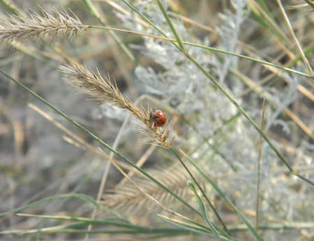The ladybird sits on a green blade of grass.