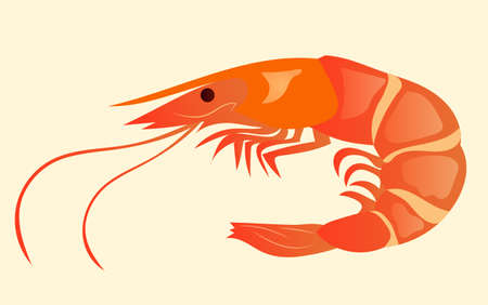 Appetizing and juicy shrimp isolated on the background. Tasty and healthy food. Japanese cuisine, illustration eps 10