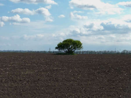 Lonely deciduous tree in the field. Protection of crops from natural adverse conditions. Фото со стока - 133081420