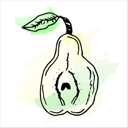 Imitation of watercolor paint. Bright and juicy illustration of a pear on a white background. eps 10