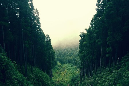 passages: Deep jungle Stock Photo