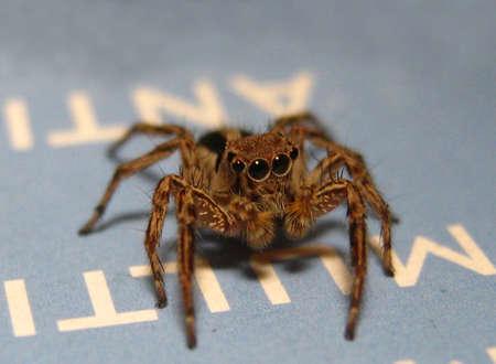 multy: Spider