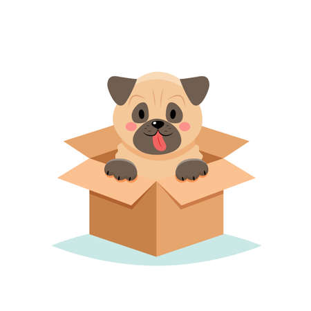 Adopt a pet - cute dog in a box, isolated on white background